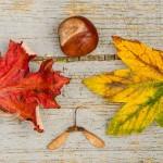 fall-970336_1920