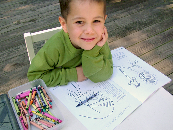 4 Ideas for Using Our 'Miracle of Life Coloring & Activity Book' in School